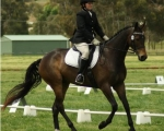 auster-spring-dressage-rmoore-2011