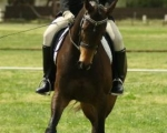 auster-spring-dressage-rmoore3-2011