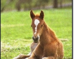 paperlacefoal