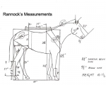 rannocks_measurements