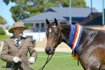 Adelaide Royal Breeds 2013